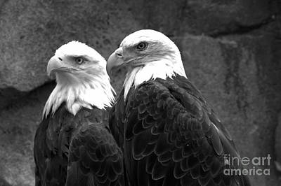 Photograph - Together In Montana Black And White by Adam Jewell