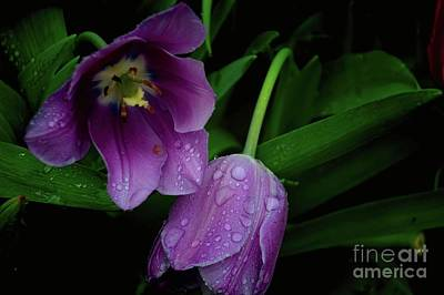Photograph - Together In The Rain by Diana Mary Sharpton
