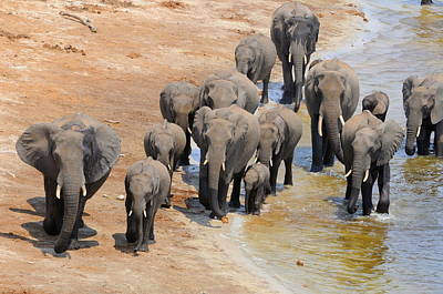 Elephant Photograph - Together We Are One by Roger Brown