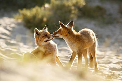 Licking Photograph - Togetherness - Mother And Kit Moment by Roeselien Raimond