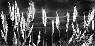 Photograph - Toi Toi In Black And White by Nareeta Martin