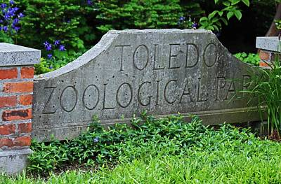 Photograph - Toledo Zoological Park by Michiale Schneider