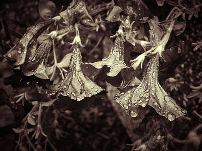 Photograph - Tolling Bells Of Sorrow by Will Jacoby Artwork