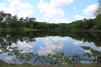 Photograph - Tom Brown Park Pond by Carol Groenen