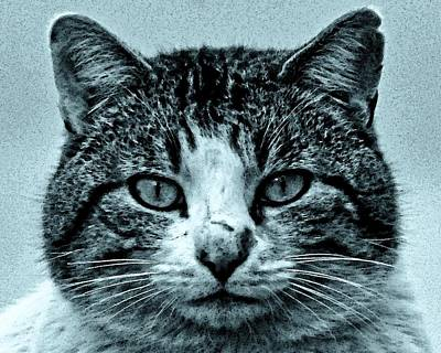 Photograph - Tom Cat by Tony Grider