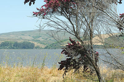 Photograph - Tomales Bay Red Flowering Tree by Peter Dyke