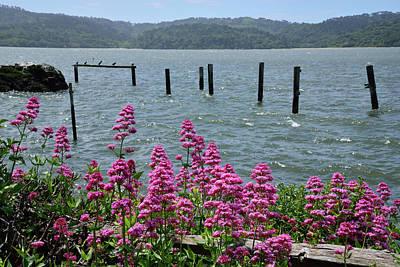 Tomales Bay Wildflowers  Art Print