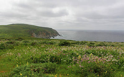 Tomales Point Flowers Art Print