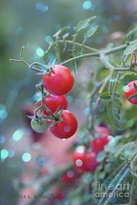 Photograph - Tomato And Light by Donna L Munro