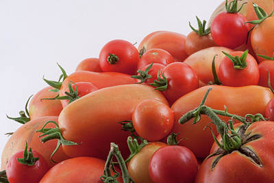 Photograph - Tomato Hill by James BO Insogna