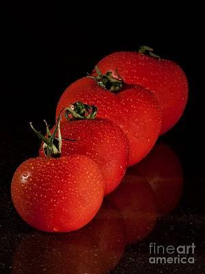 Tomato Line Up Original