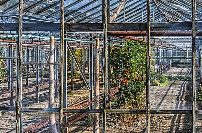 Tomatoes And Pumpkins Art Print