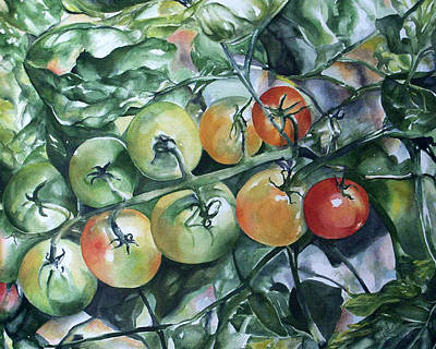 Tomatoes In Dad's Garden Art Print