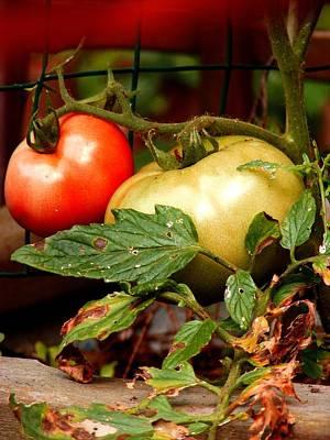 Tomatoes In Red N Green Art Print by Margie Avellino