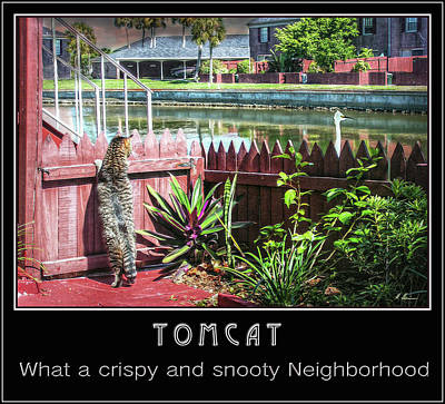 Photograph - Tomcat Breakfast by Hanny Heim