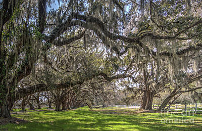 Photograph - Tomotley Plantation by ELDavis Photography