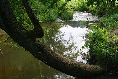 Photograph - Toms Creek In Early Summer 1 by Kathryn Meyer