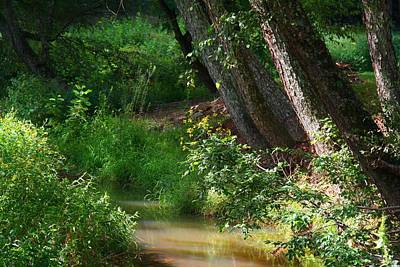 Photograph - Toms Creek In Late Summer by Kathryn Meyer