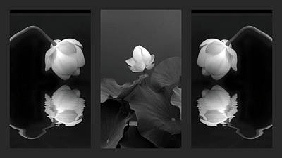 White Water Lily Photograph - Tonal Study Triptych by Jessica Jenney
