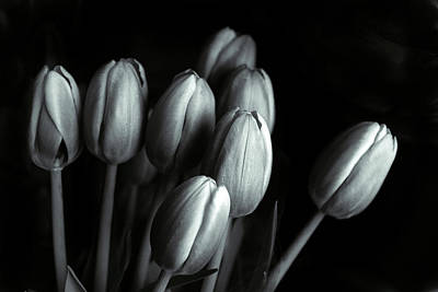 Print featuring the photograph Tonal Tulips by Jessica Jenney