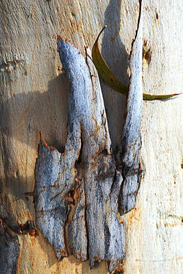 Photograph - Tones Of Eucalyptus Bark by Joy Watson