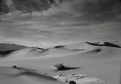 Photograph - Tones Of Mesquite by Kunal Mehra