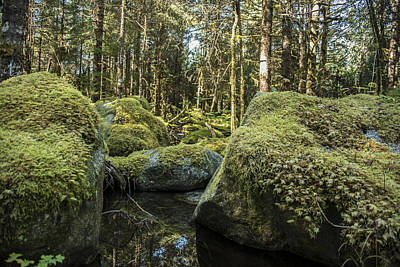 Robin Williams Photograph - Tongass National Forest by Robin Williams