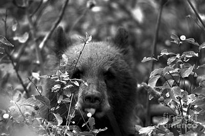 Photograph - Tongue On The Berry Black And White by Adam Jewell