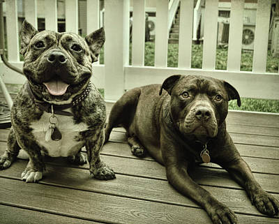 Photograph - Tonka And Benny by JAMART Photography