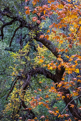 Best Photograph - Tonto Trees by Gary Migues