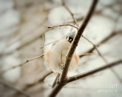 Titmouse Photograph - Too Big To Hide by Kerri Farley