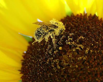 Photograph - Too Much Pollen by Ben Upham III