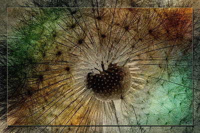 Photograph - To Seed by WB Johnston