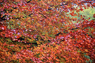 Photograph - Too Soon For Fall by Jez C Self