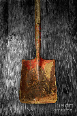 Old Shovels Photograph - Tools On Wood 2 On Bw by YoPedro