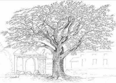 Auburn Drawing - Toomer's Oaks by Barney Hedrick