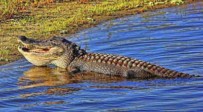 Photograph - Toothy Grin by HH Photography of Florida