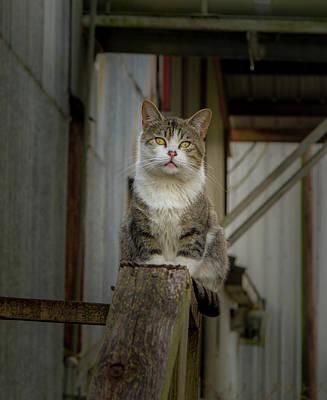 Photograph - Top Cat by Jean Noren