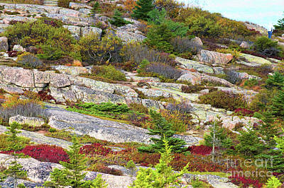 Photograph - Top Of Cadillac Mountain  by Patti Whitten