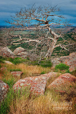 Top Of Mt. Scott Looking West II Art Print by Tamyra Ayles