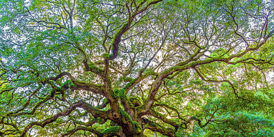 Photograph - Top Of The Angel Oak Tree Charleston Sc by John McGraw