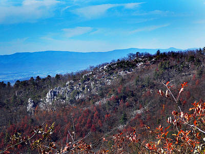 Dog And Butterfly Photograph - Top Of The Mountain by Skip Willits