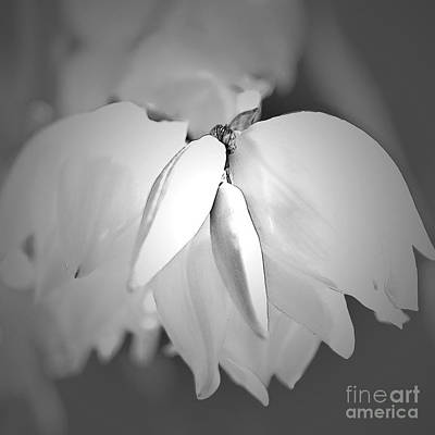 Photograph - Top Of The Yucca Plant In Black And White by Sherry Hallemeier
