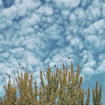 Animals Photograph - Top Pigeons #birds #pigeon #trees #sky by Rafa Rivas