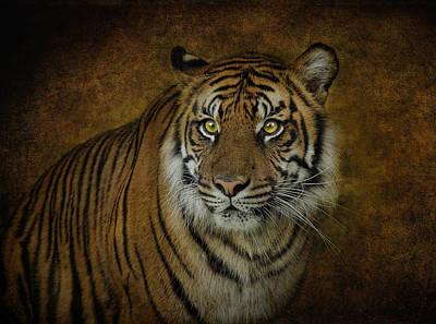 Topaz Tiger  Art Print