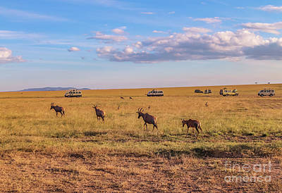 Photograph - Topi Baby Following The Herd by Cami Photo