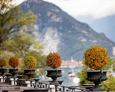 Photograph - Topiary Plants On Patio In Italy by Susan Schmitz