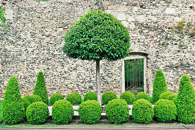 Pruning Photograph - Topiary Tress by Tom Gowanlock