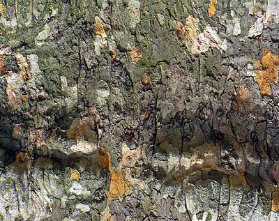 Photograph - Topography In Bark by Lynda Lehmann