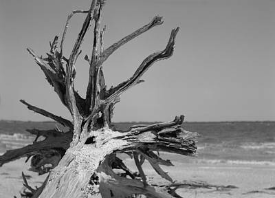 Photograph - Toppled Tree by William Wetmore